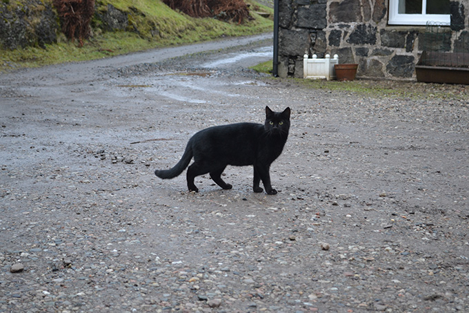 Farm cat at Ardnacross